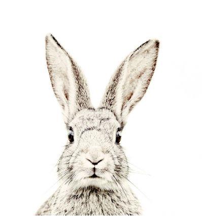 groovy magnets - magnet wallpaper rabbit (large)