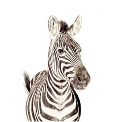 groovy magnets - magnet wallpaper zebra