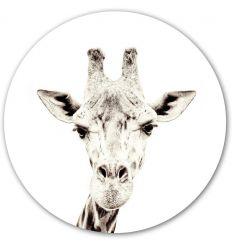groovy magnets - magnet wall sticker giraffe